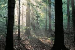 Kopia gory swietokrzyskie puszcza 3 fot k peczalski — kopia
